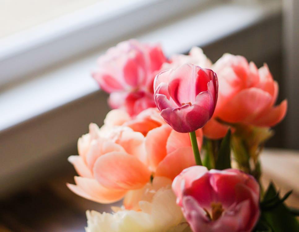 ดอกไม้สวยๆ รูปภาพสวยๆ