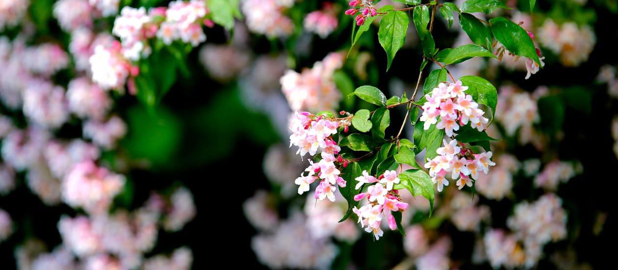 flowers-nice-17