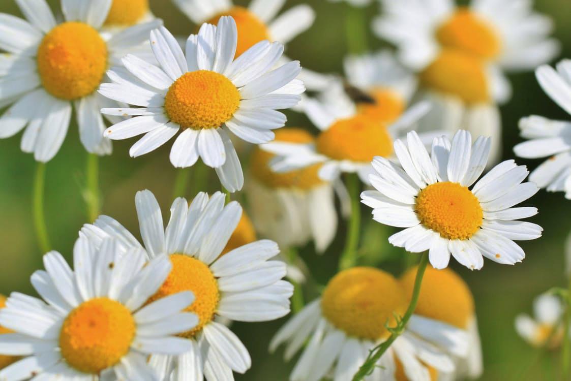 flowers-nice-18