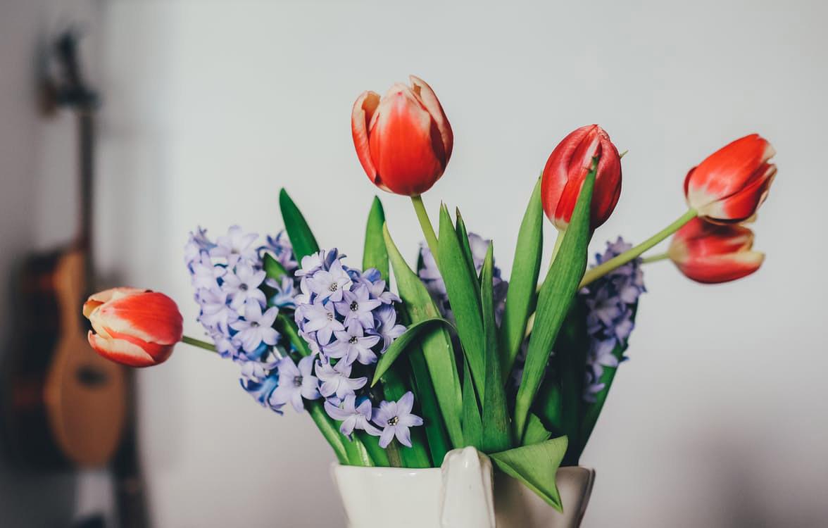 flowers-nice-19