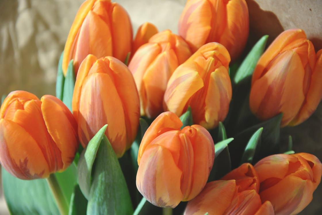 flowers-nice-20