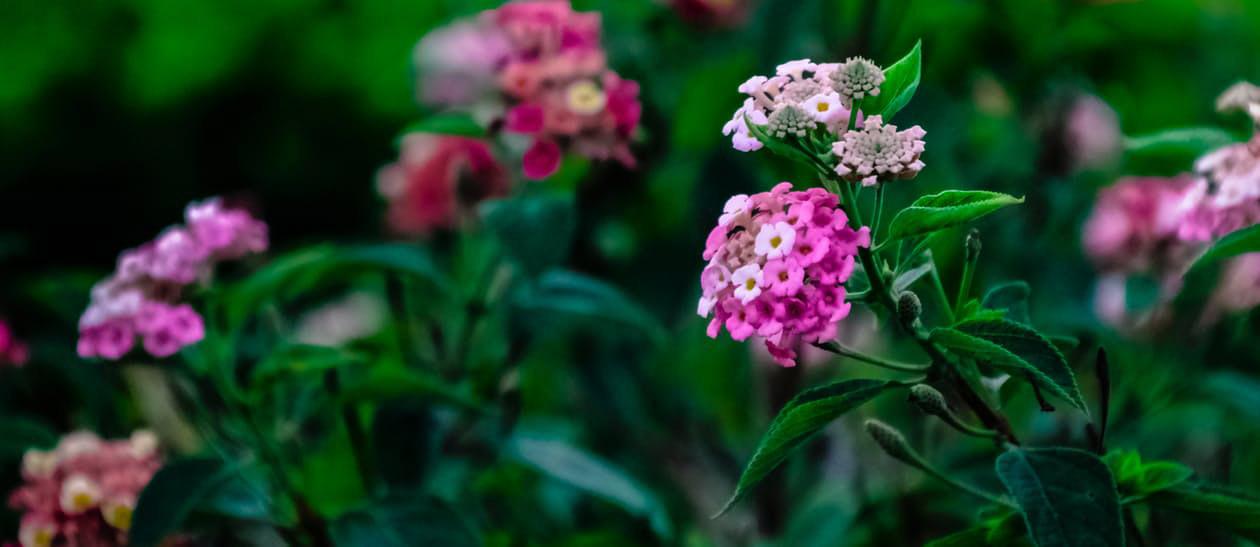 flowers-nice-22