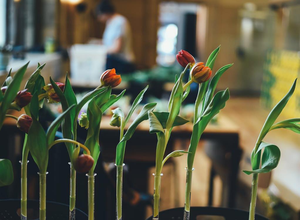 flowers-nice-23