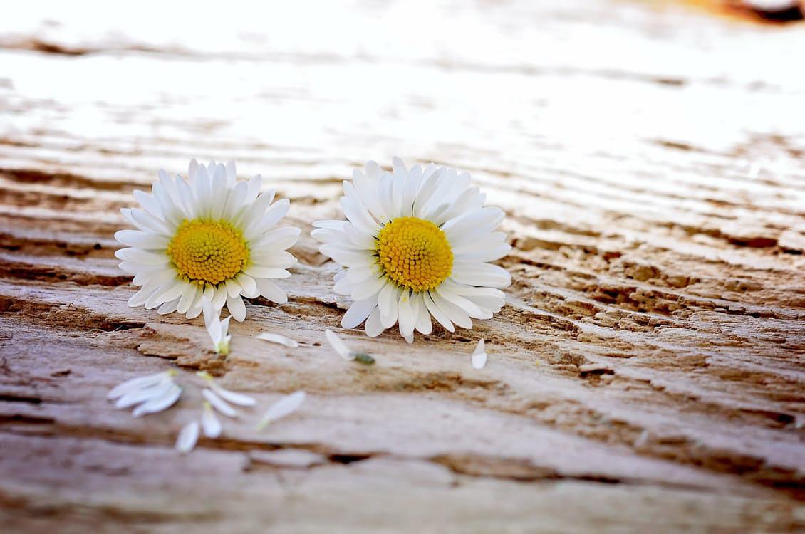 flowers-nice-24