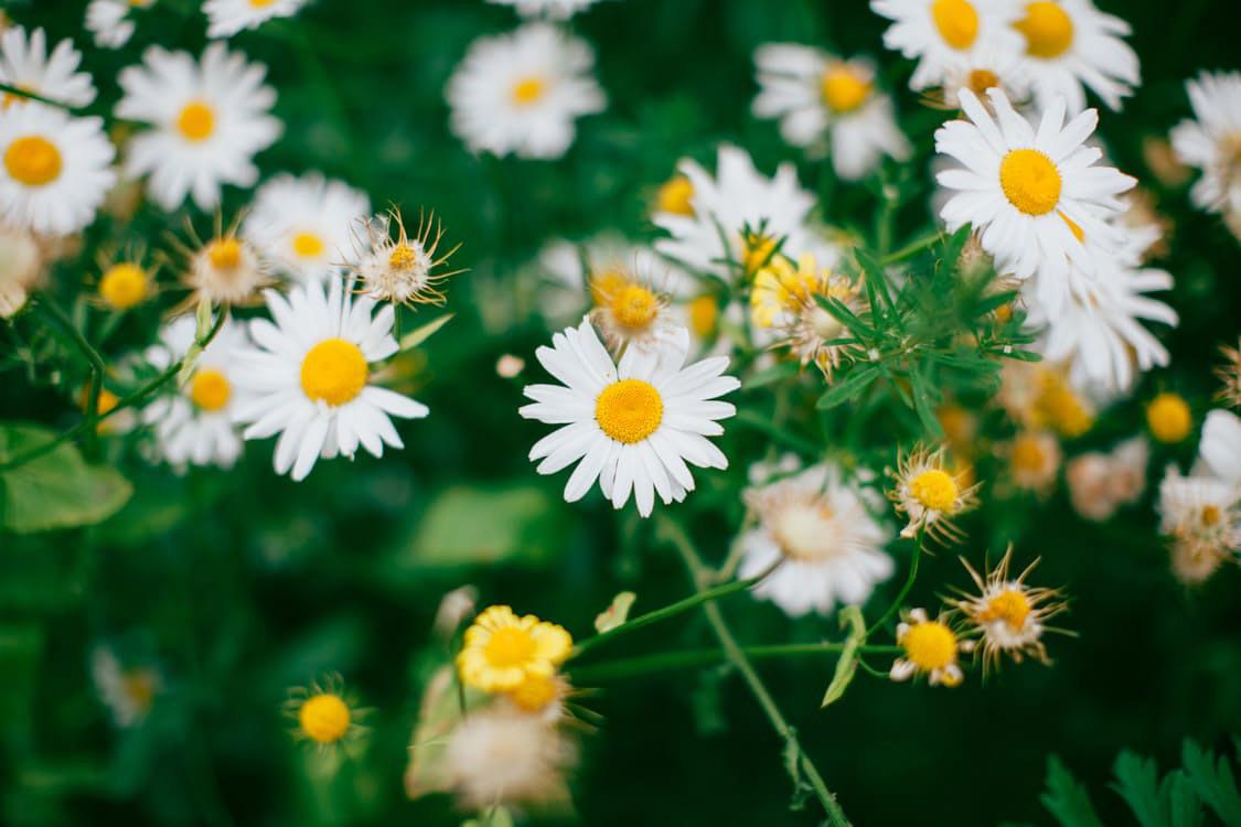 flowers-nice-25