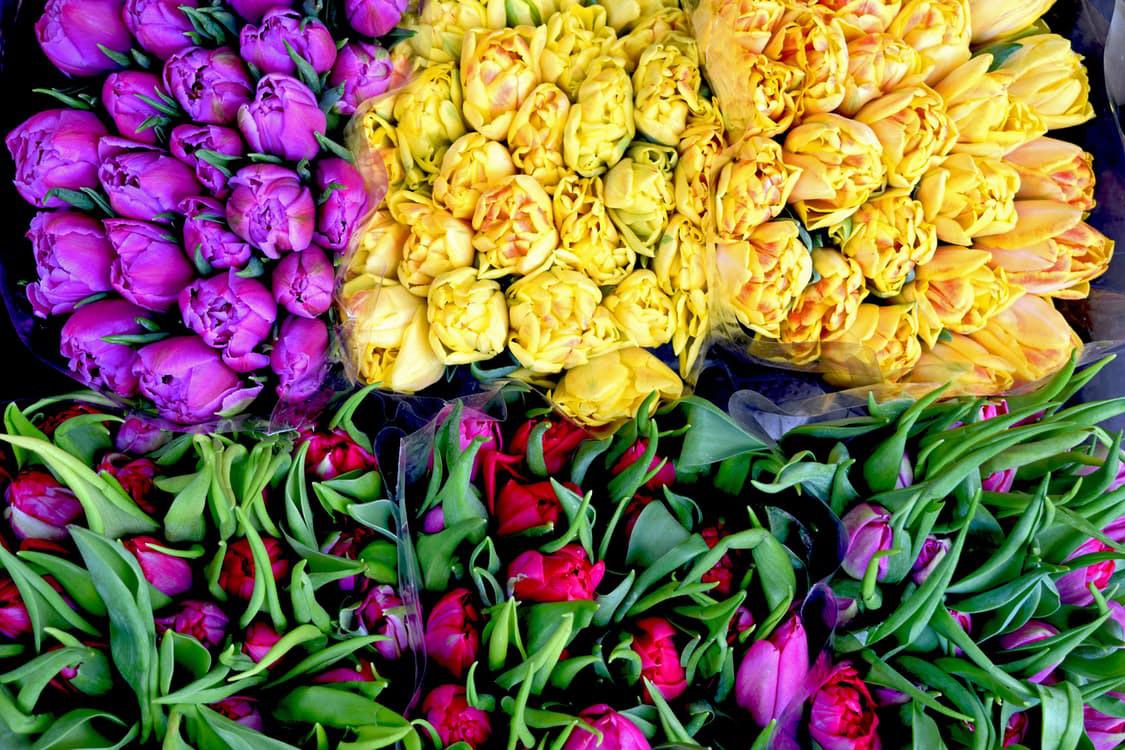 flowers-nice-26