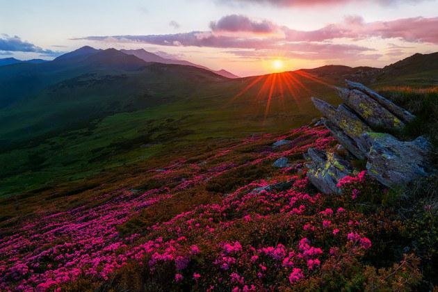 12. ภูเขา Rodnei สีชมพูของดอกไม้ ในยามพระอาทิตย์ตกดิน
