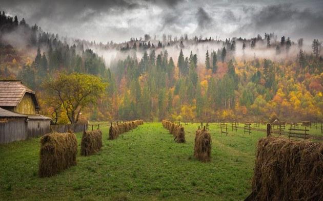 13. Maramures ชมความงามของต้นไม้ ใบหญ้า