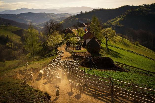 15. ช่วงฤดูใบไม้ผลิในหมู่บ้าน Holbav