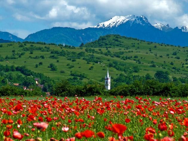 22. Ţara Bârsei สีแดงสดของดอกไม้
