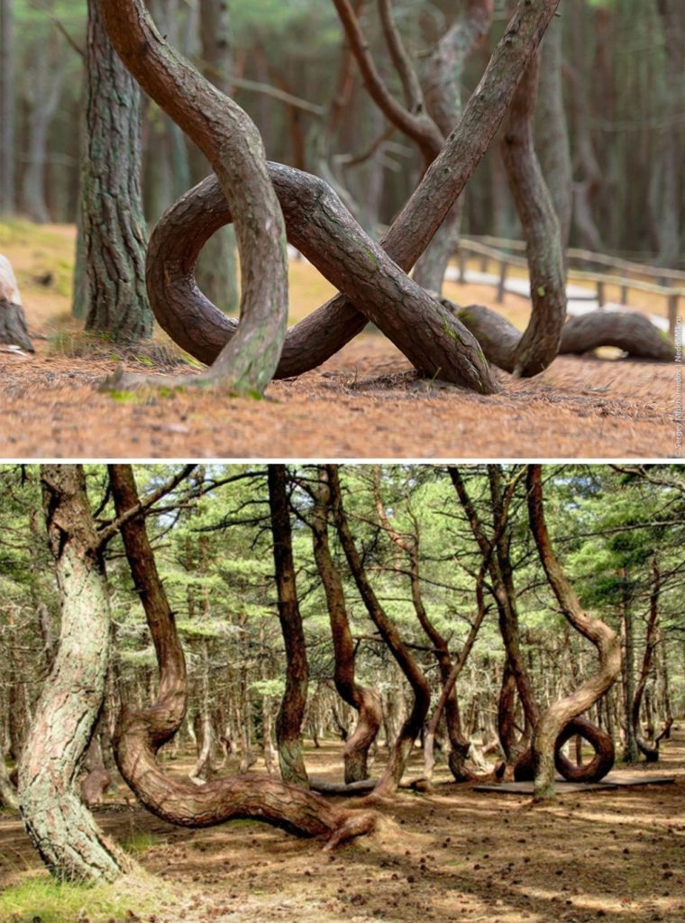 5 A dancing forest