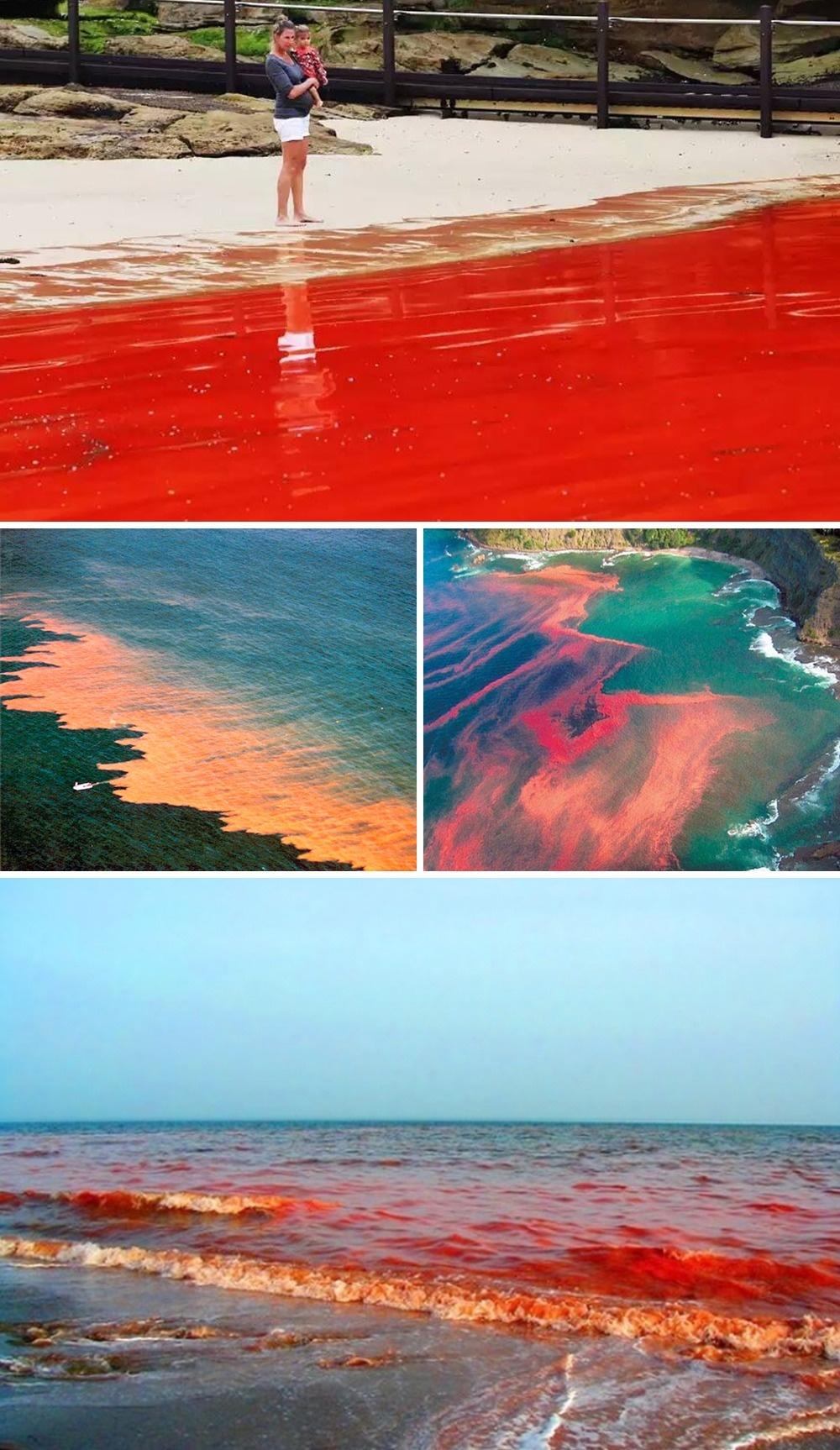 7 Red tide