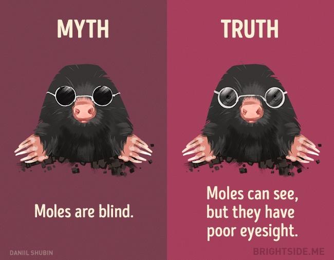 12 ความเชื่อผิดๆ เกี่ยวกับสัตว์ทั้งหลาย