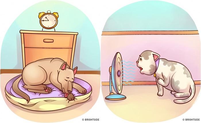 dog japan ญี่ปุ่น สัตว์โลกน่ารัก สุนัข อาการป่วย