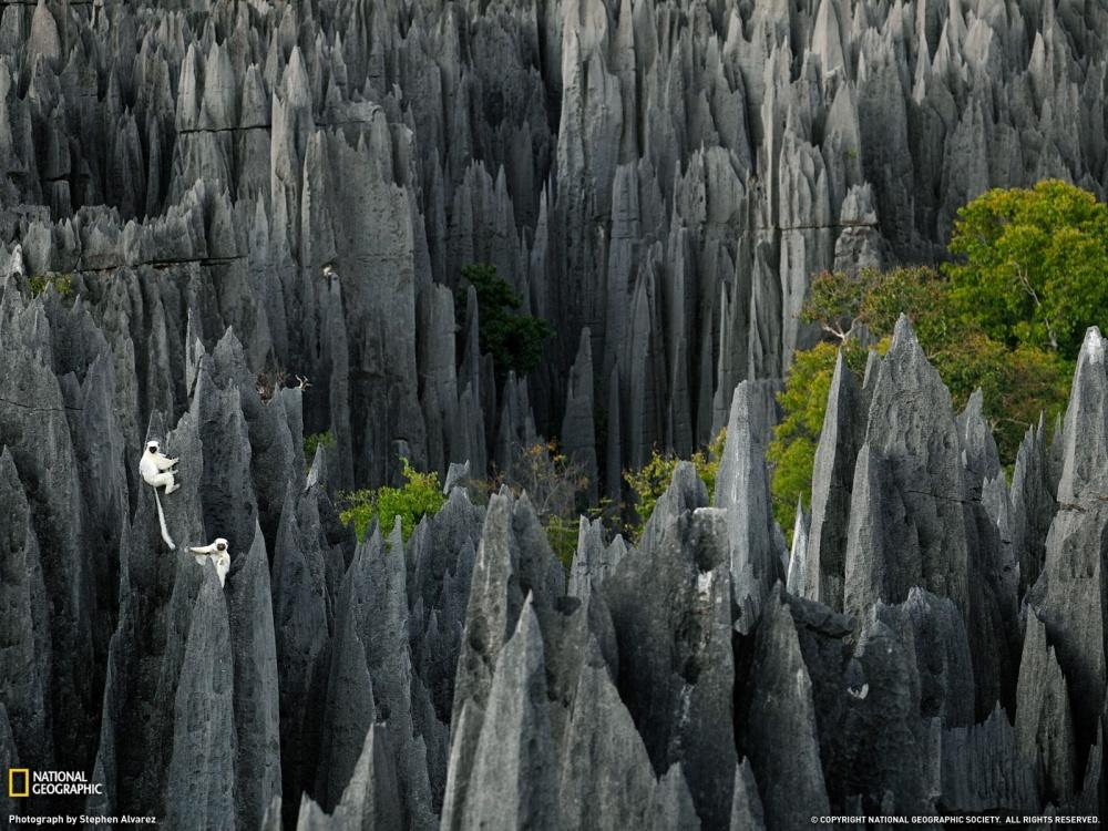 Tsingy de Bemaraha, a 'stone forest' in Madagascar