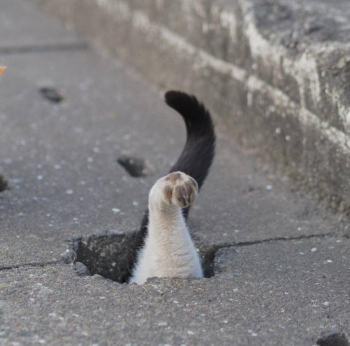 cat cute (1)