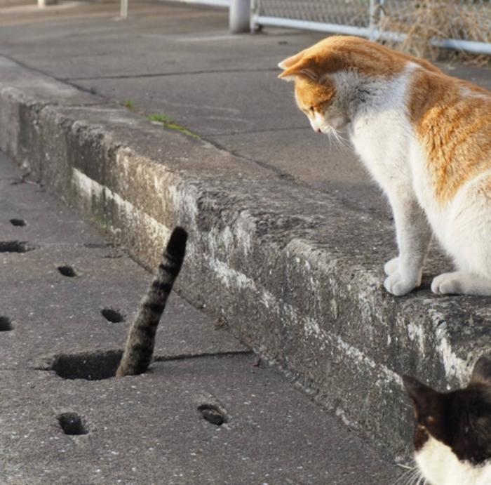 cat cute (3)