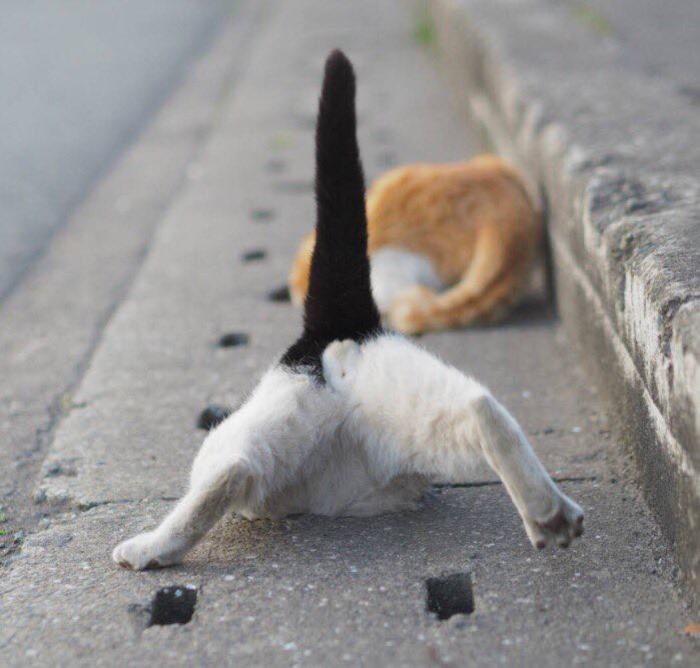 cat cute (4)