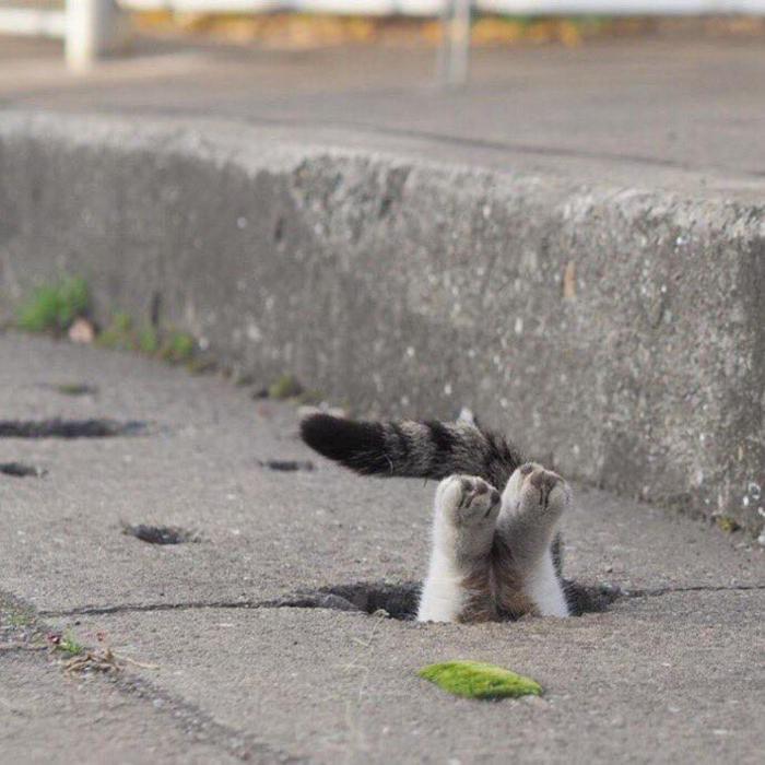 cat cute (6)