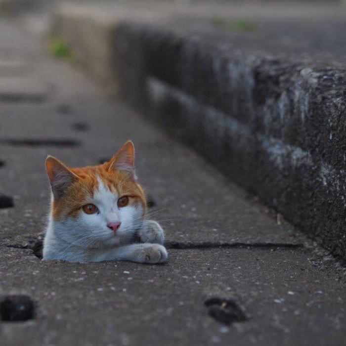 cat cute (7)