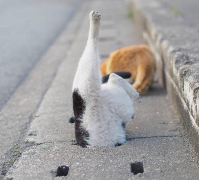 cat cute (8)
