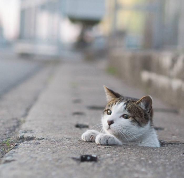 cat cute (9)