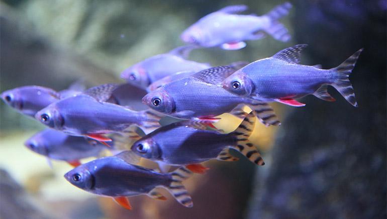 fish-c