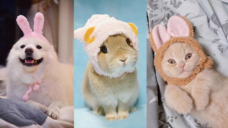 กระต่าย หมา แมว