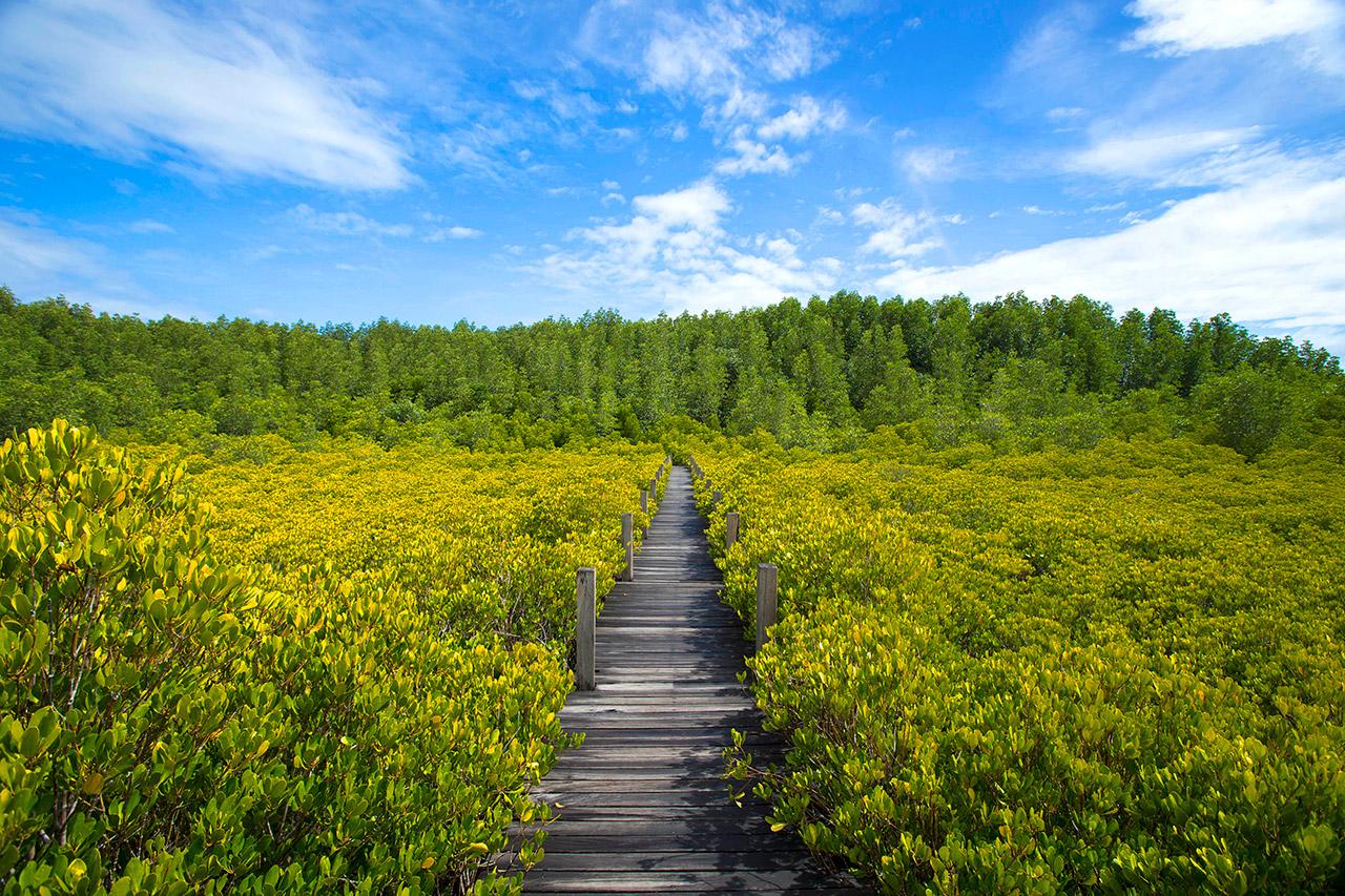 ป่าสีทอง-อ.แกลง-จ.ระยอง