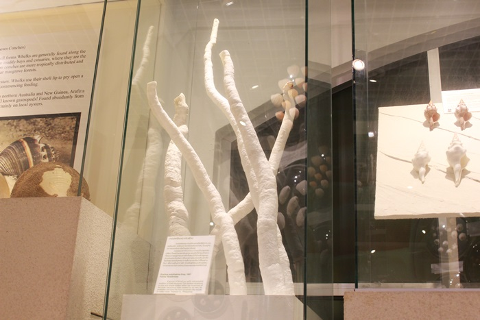 หอยเพรียงเจาะหินยักษ์ พิพิธภัณฑ์เปลือกหอย กรุงเทพ