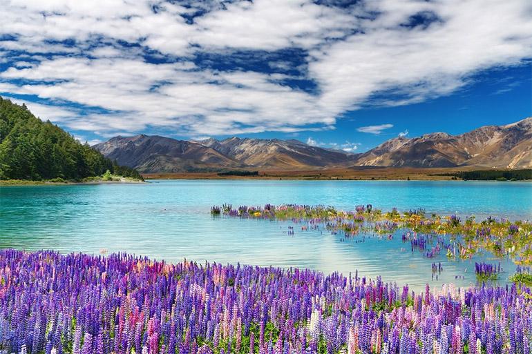 ท่องเที่ยว ทะเลสาป นิวซีแลนด์ สระน้ำ