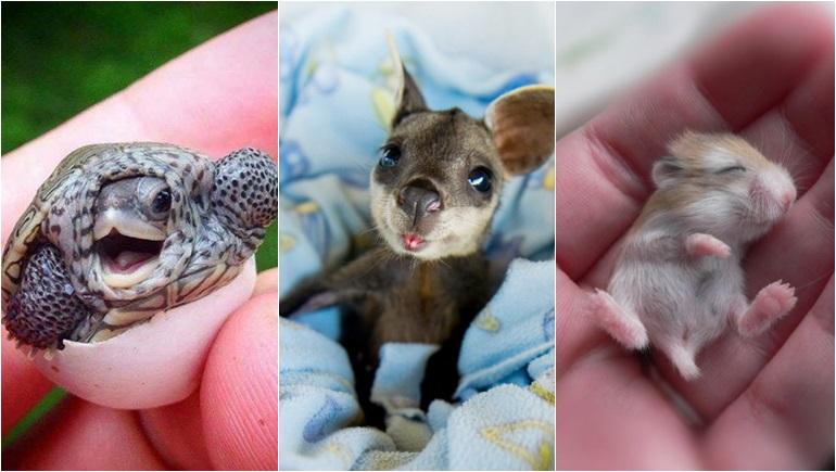 ลูกสัตว์ สัตว์ สัตว์โลกน่ารัก