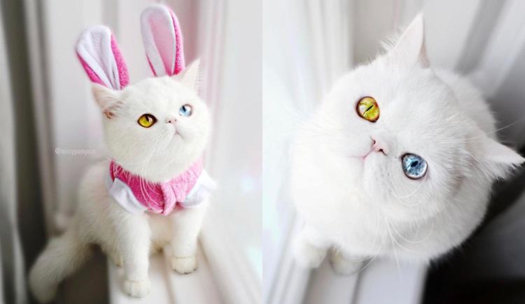 ทาสแมว น้องแมวตา 2 สี แมว แมวเหมียว