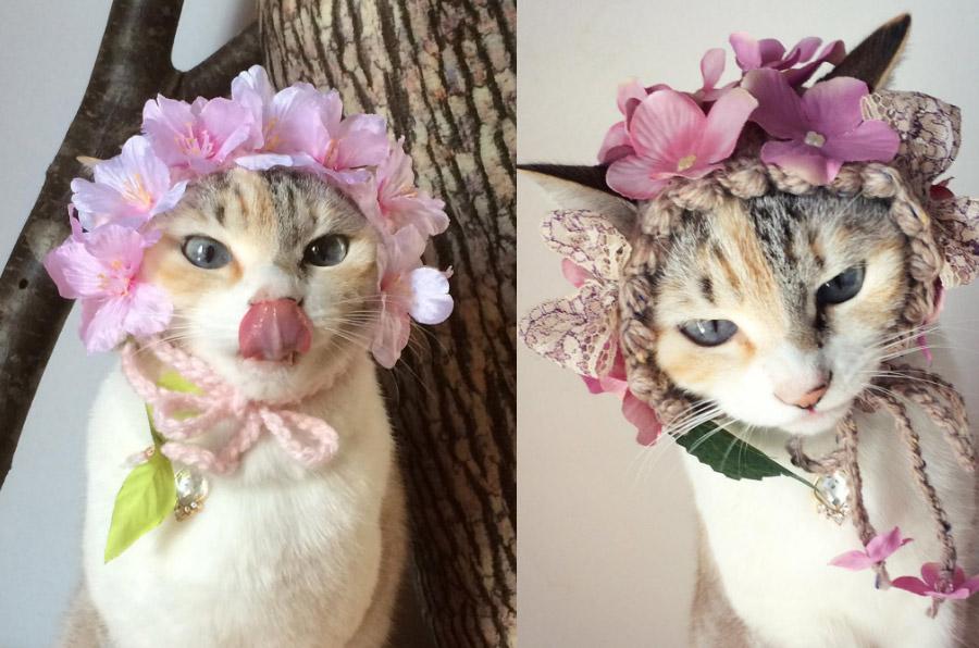cat instagram ทาสแมว อินสตาแกรม แมว ไอจีสวยๆ ไอจีแมวน่ารัก