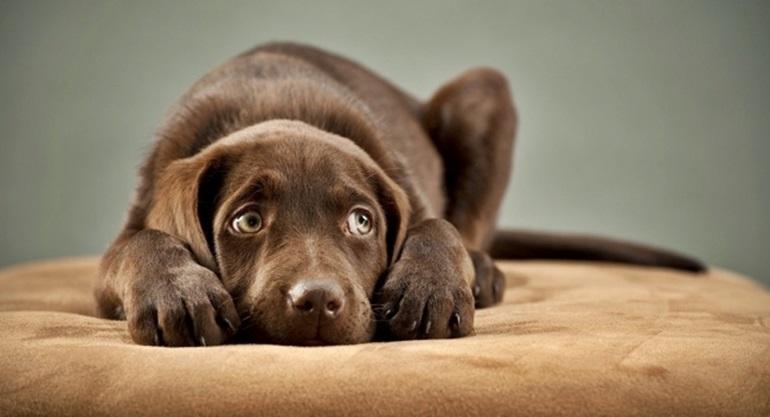 คนรักหมา ความรู้รอบตัว หมา