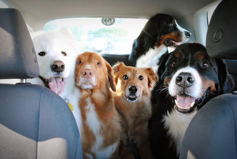 doglover คนรักน้องหมา เจ้าตูบ