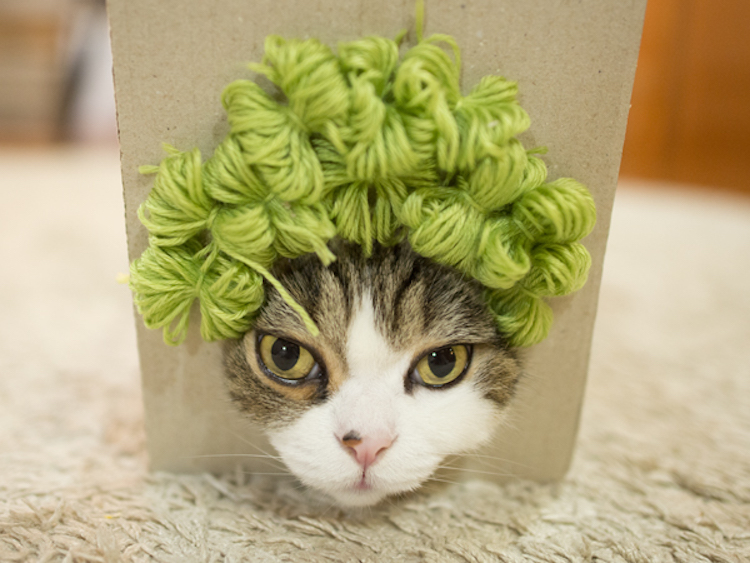 cat มารุ แมว แมวกล่อง