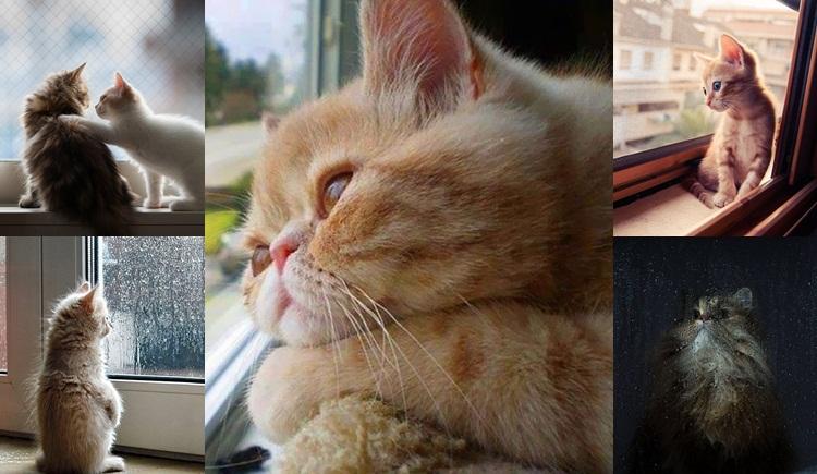 ทาสแมว ภาพน่ารัก แมวเหงา แมวเหมียว