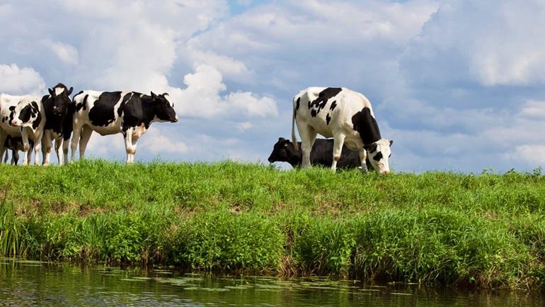 นม นมวัว สัตว์