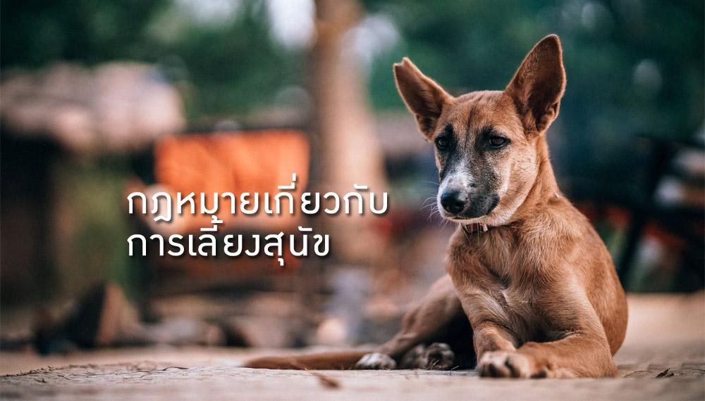 กฎหมาย สัตว์ สัตว์เลี้ยง สุนัข หมา