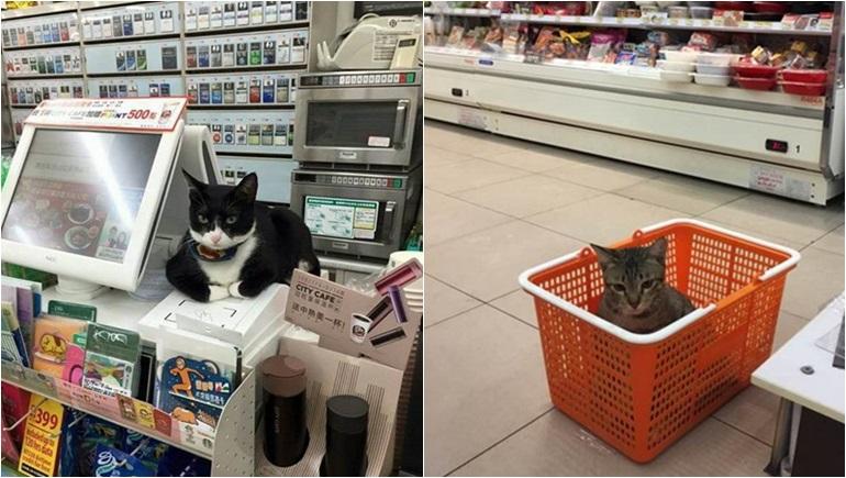 ทาสแมว แมว แมวเซเว่น