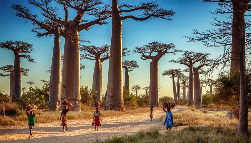 Madagascar ต่างประเทศ ท่องเที่ยว เกาะ เกาะมาดากัสการ์