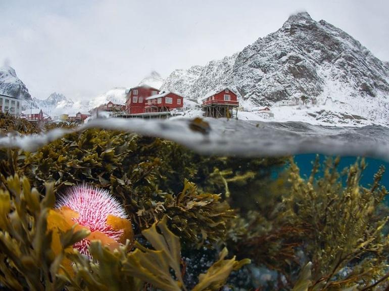 National Geographic ธรรมชาติ รูปสวย