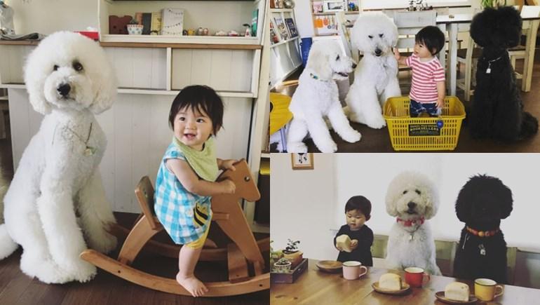 ญี่ปุ่น มาเมะ สัตว์เลี้ยง สุนัข หนูน้อยน่ารัก เพื่อนซี้สี่ขา