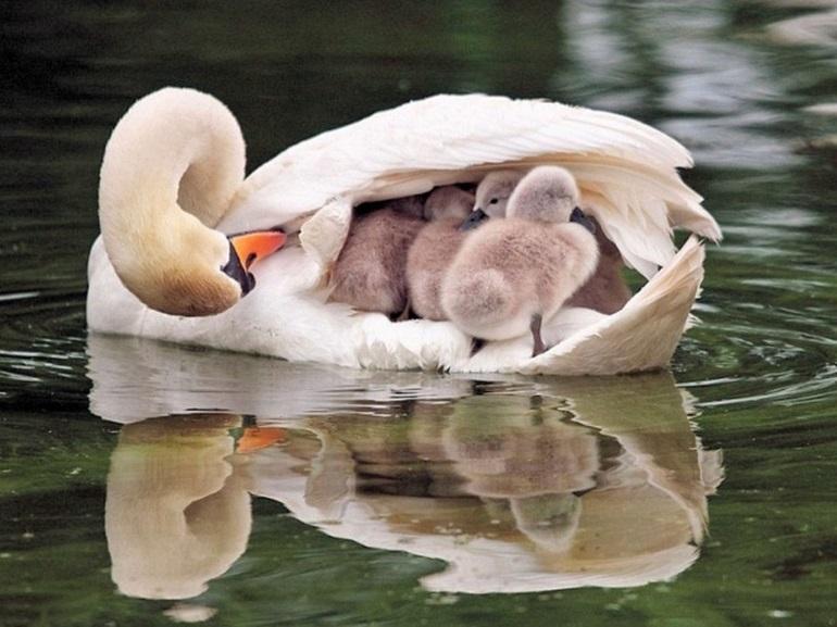 สัตว์โลก แม่ลูก