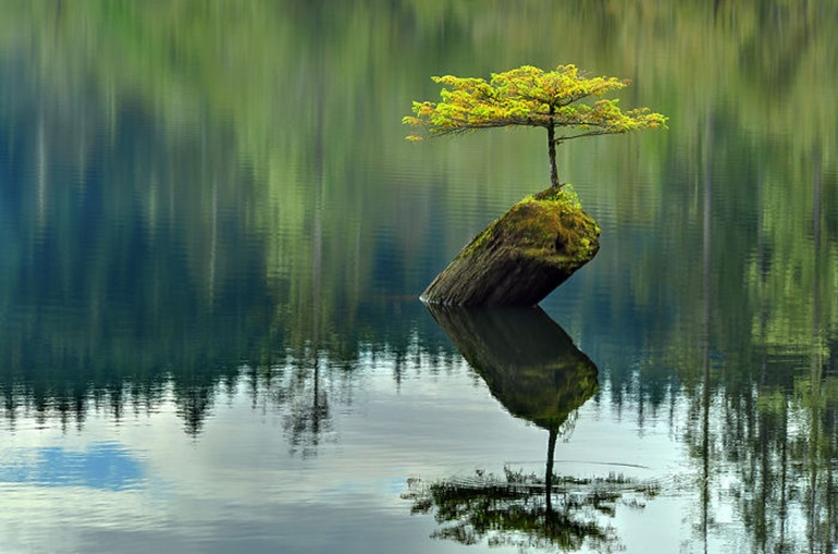 ขำๆ ต้นไม้ ไม่ยอมตาย