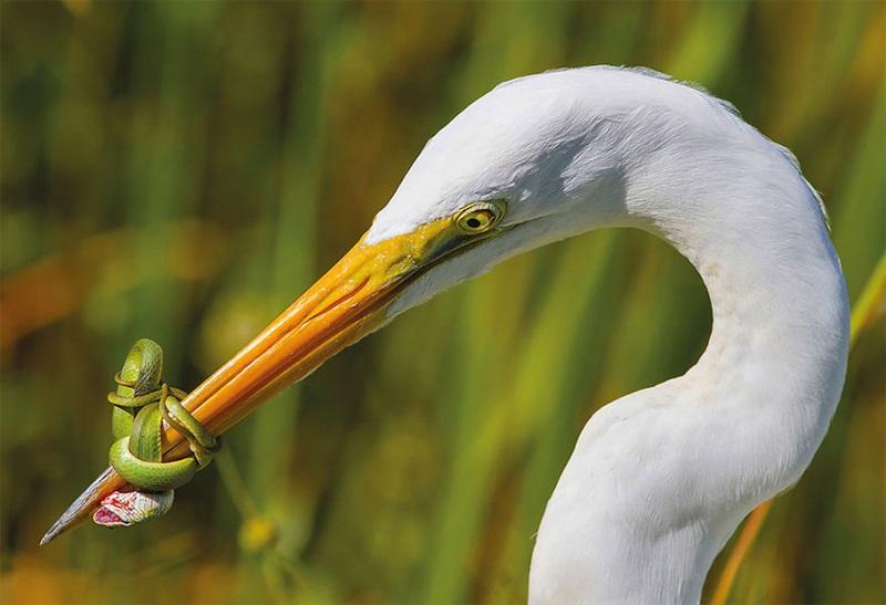 นก ภาพถ่าย