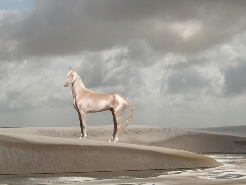 ม้า สัตว์โลก