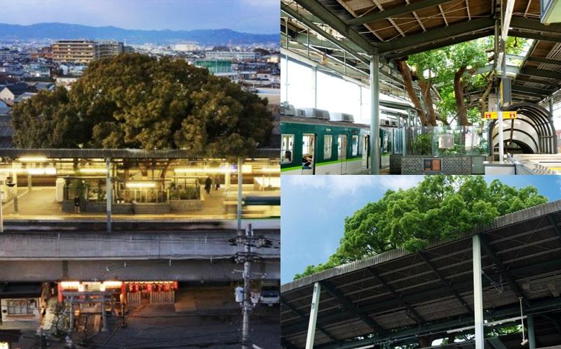 osaka ญี่ปุ่น ต้นไม้เก่าแก่ สถานีรถไฟญี่ปุ่น