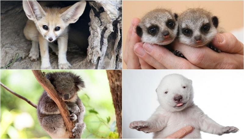 น่ารัก ลูกสัตว์ สัตว์โลก